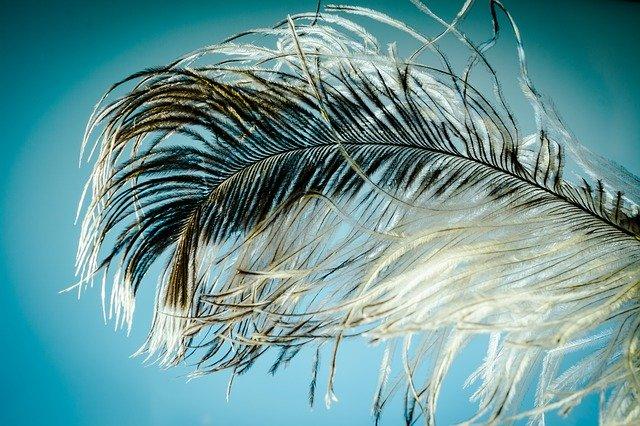 enfermedades que se reflejan en las plumas de las aves