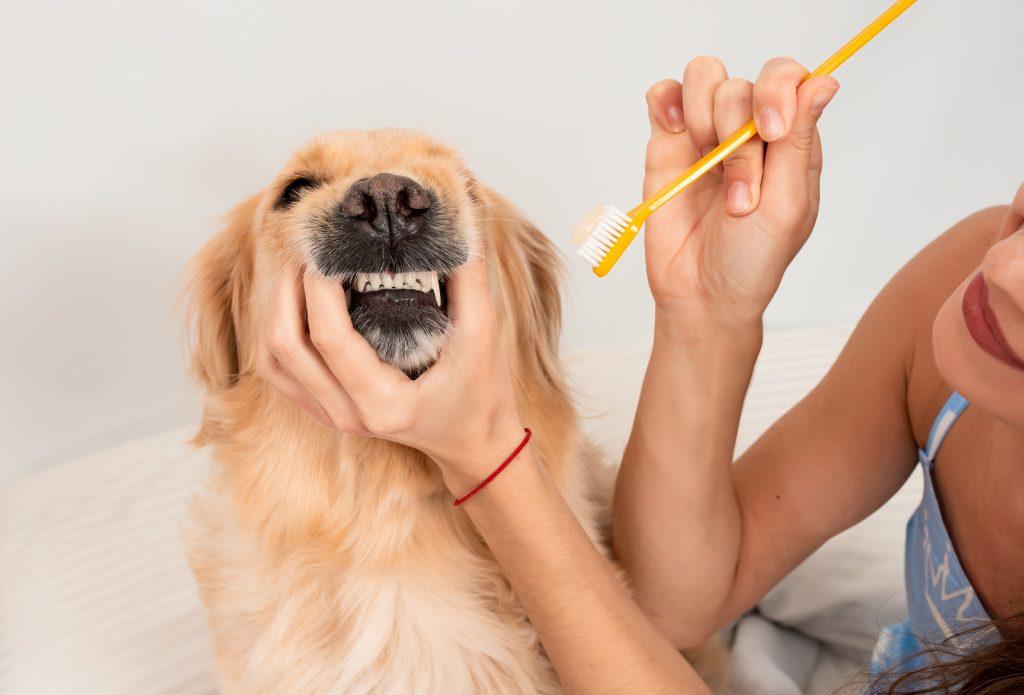 errores que cometemos con el perro en su higiene