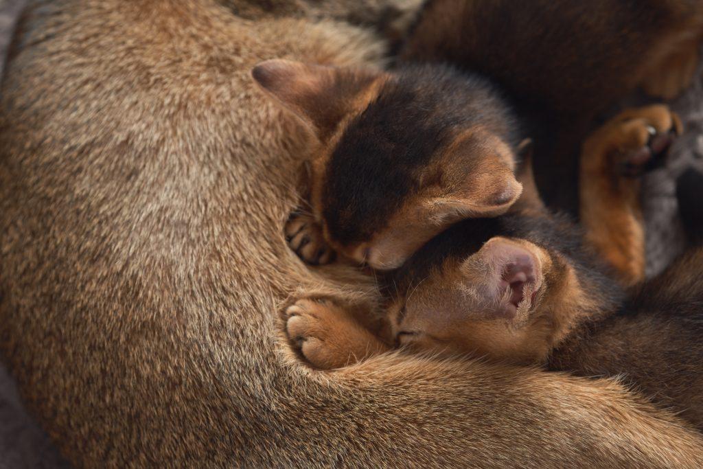 Los gatos pueden beber leche materna