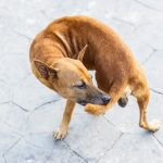 mi perro se muerde la cola