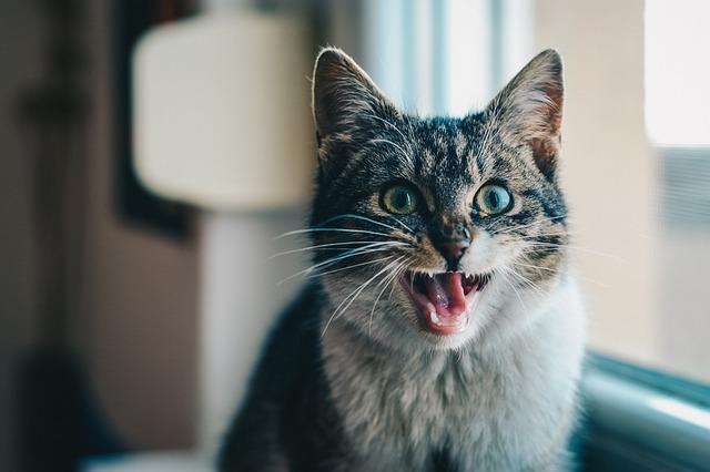 motivos por los que mi gato jadea