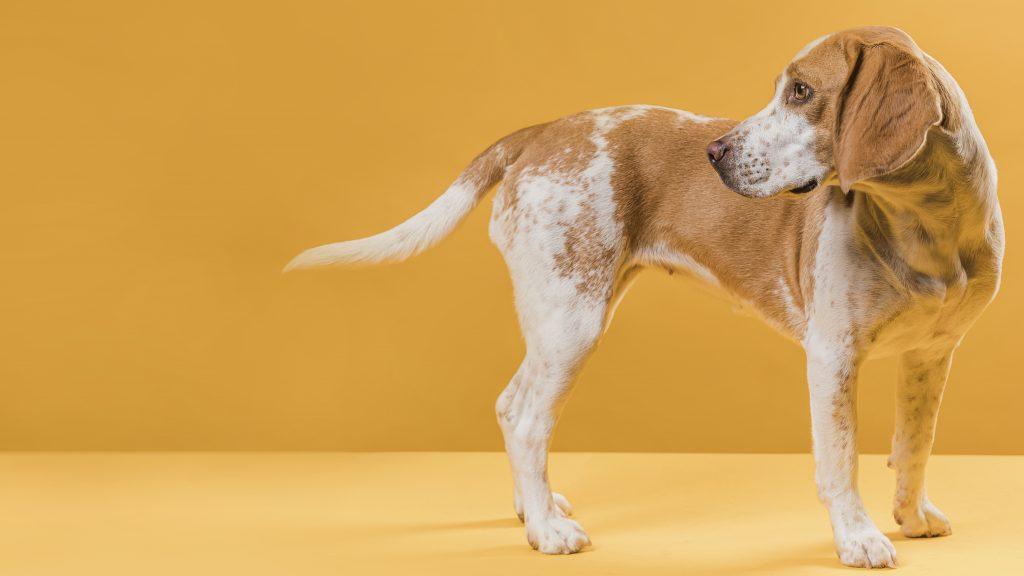 motivos por los que un perro se muerde la cola