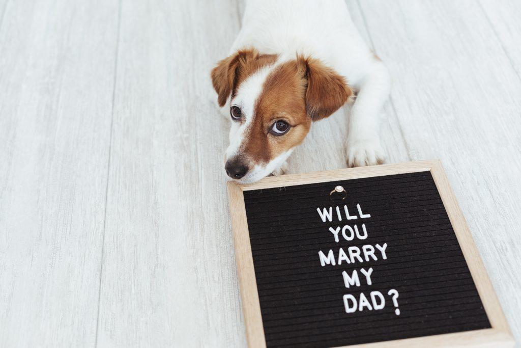 para que esté mi perro en mi boda debo educarle