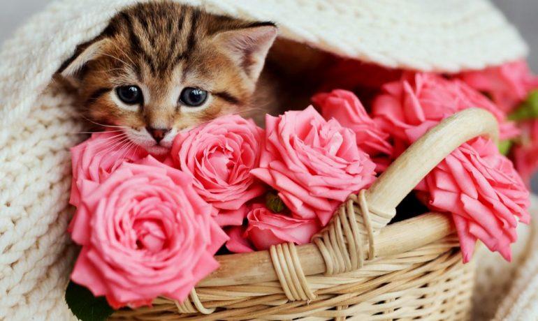 perfumar al gato no es aconsejable