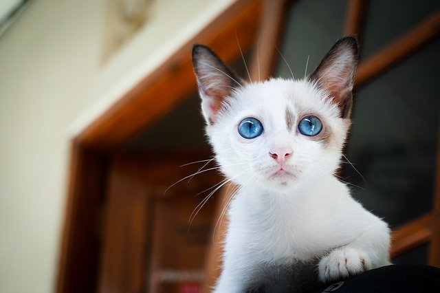 planteamiento antes de tener un gato