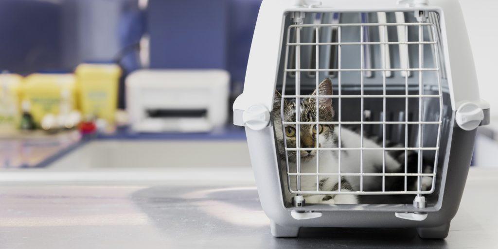 preparación previa antes de viajar con gatos en avión