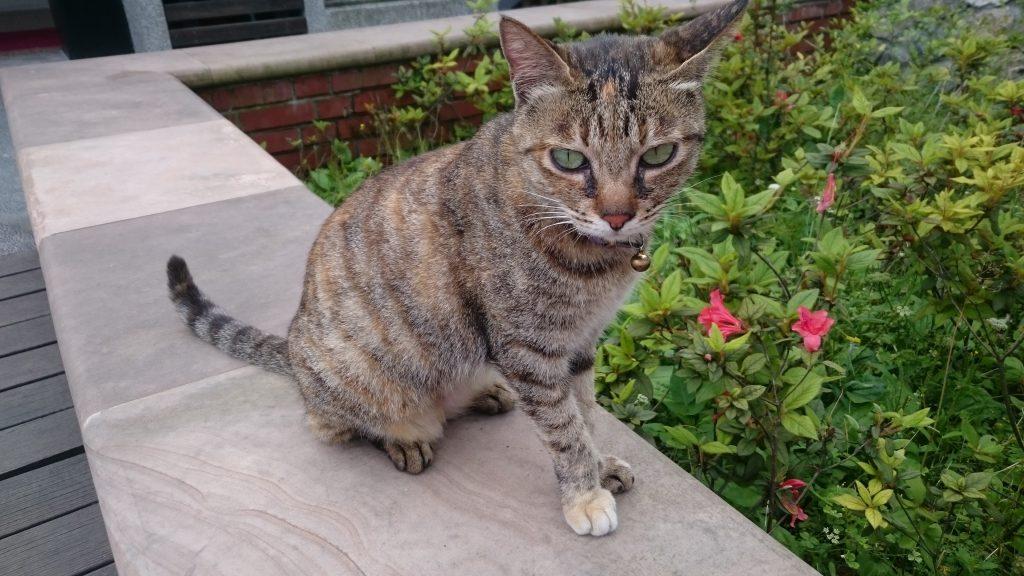 Protección ante la Síntomas de la Leishmaniasis en gatos
