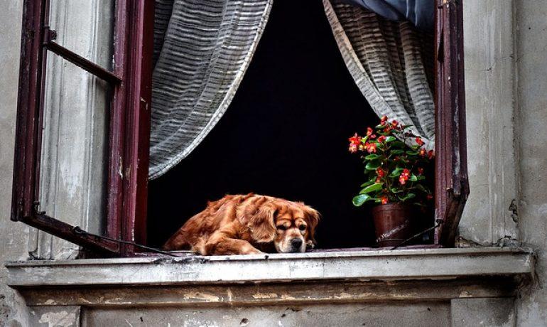 protege a tu mascota de ventanas y balcones