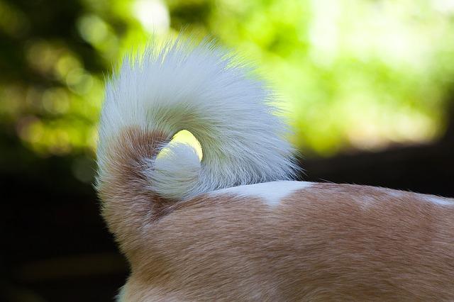 qué hago si mi perro se muerde la cola