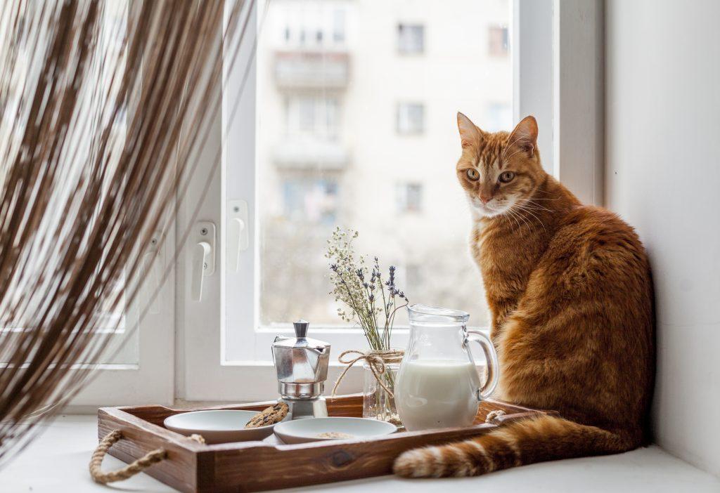 síntomas que indican que mi gato no puede beber leche