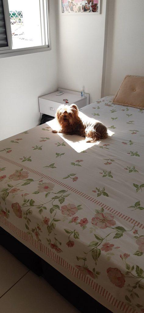 animales disfrutando del sol