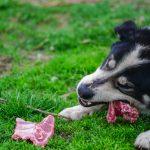 bacterias en la comida cruda de las mascotas