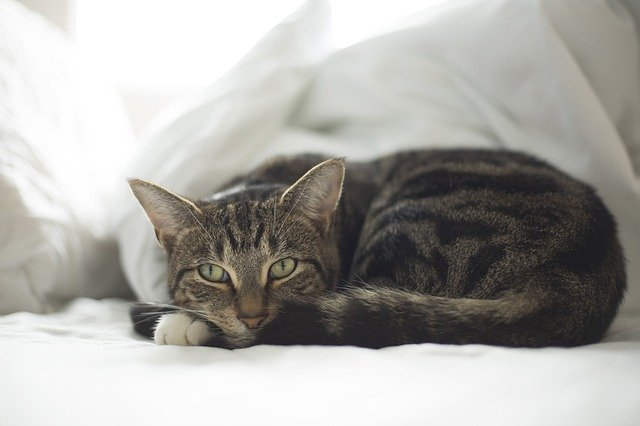 claves para saber cómo alimentar a un gato anciano