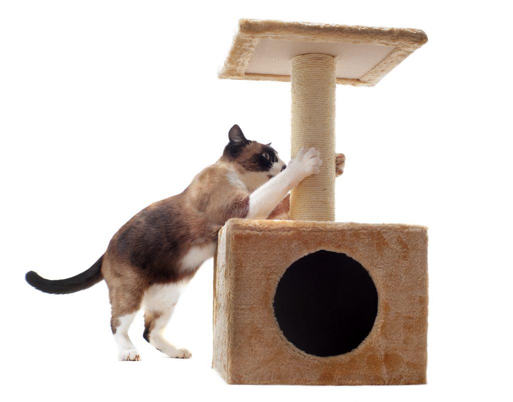 cómo entretener a mi gato en casa con rascadores