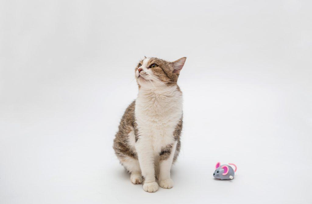 cómo entretener a mi gato en casa con sus juguetes
