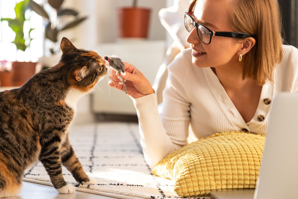 cómo entretener a mi gato en casa pasando tiempo con él