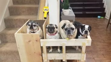 Construye un elevador para sus perros ancianos rescatados