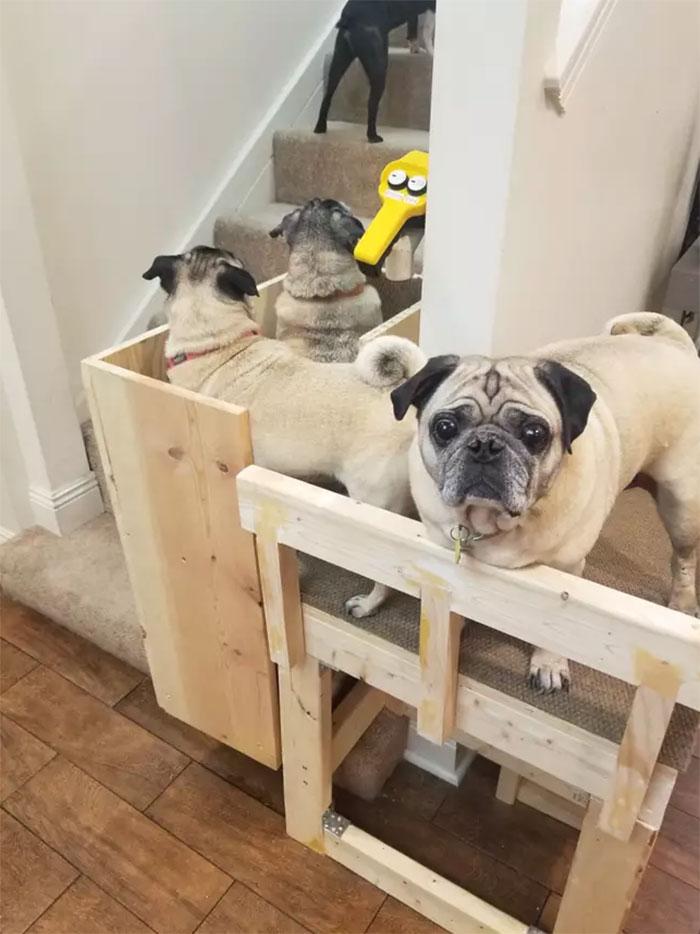 el doggie vator es un ascensor para perros