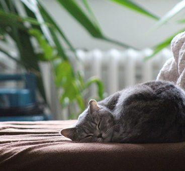 el hogar perfecto para gatos
