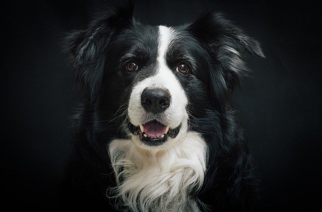 el perro más inteligente