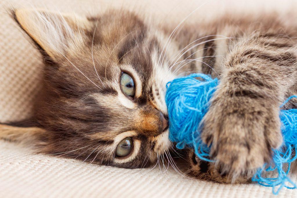 en el hogar perfecto para gatos no puede faltar diversión