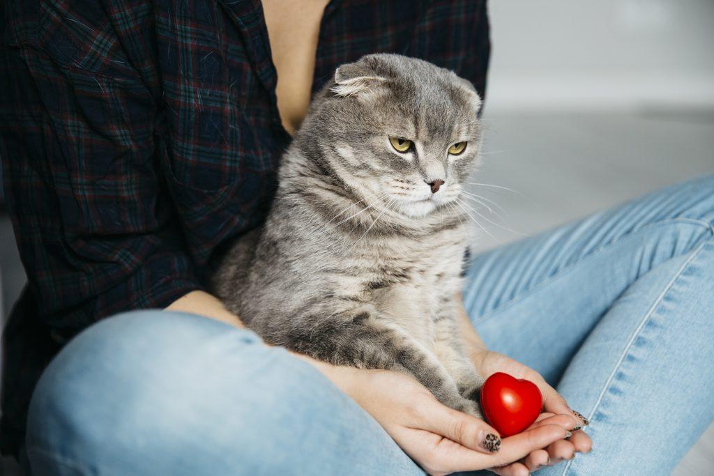 es importante saber cómo entretener a mi gato en casa