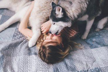 las mascotas dan las gracias