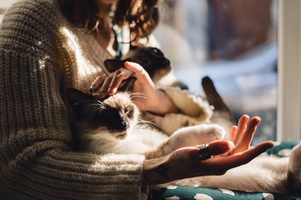 las mascotas dan las gracias a su manera