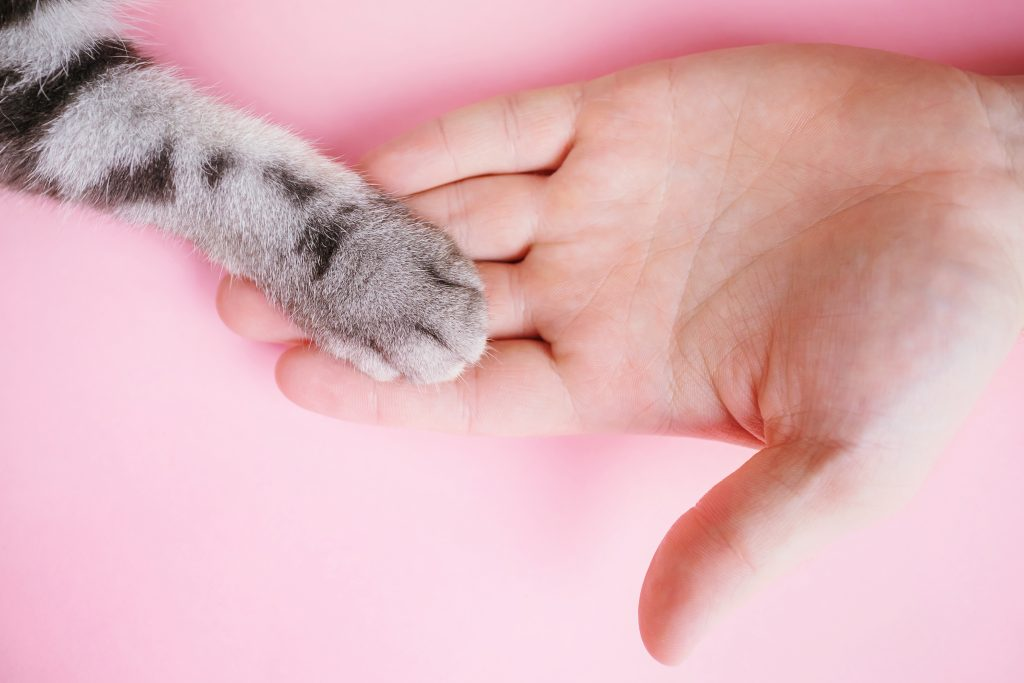 las mascotas dan las gracias con cariño