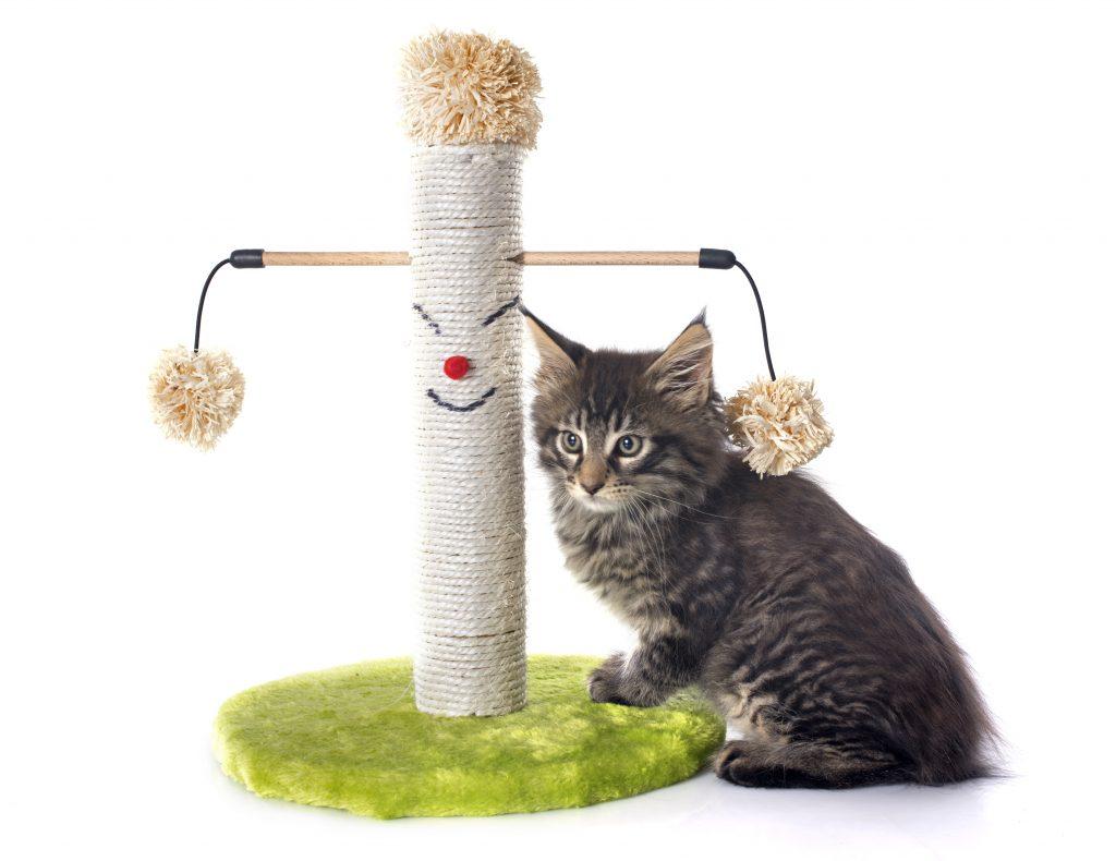 los rascadores son esenciales en el hogar perfecto para gatos