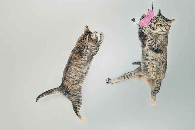 mantener a un gato en buena forma a través de juegos