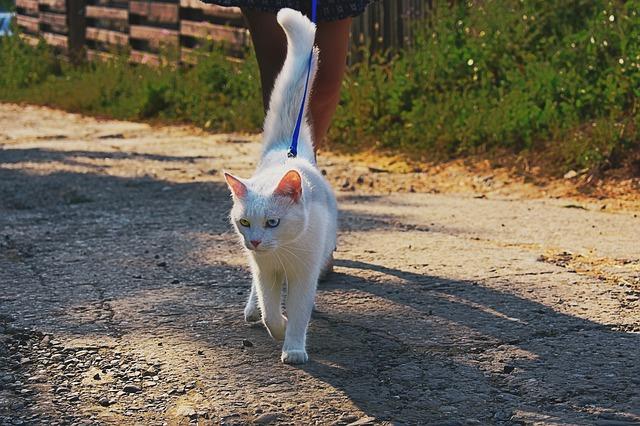 mantener al gato en buena forma con paseos