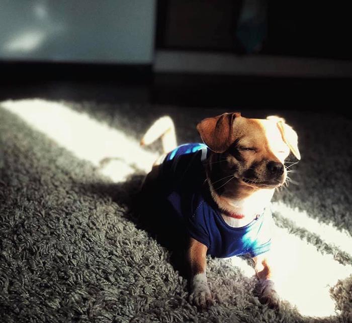 mascota buscando el sol