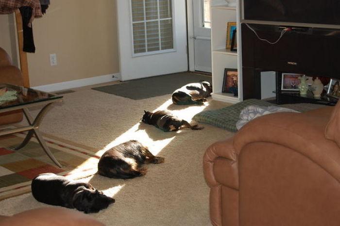 mascotas disfrutando del sol en fila