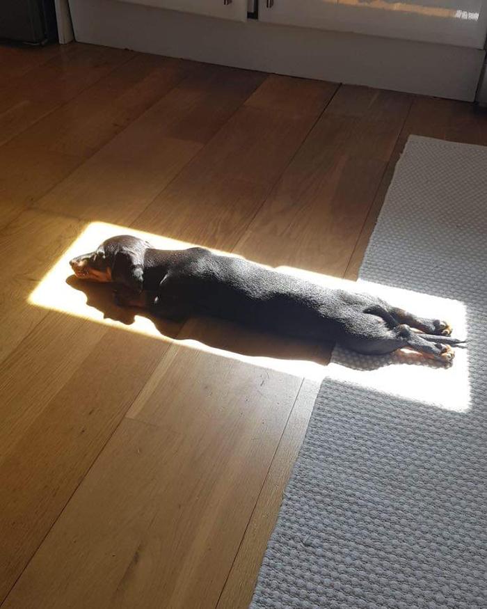 mascotas disfrutando del sol