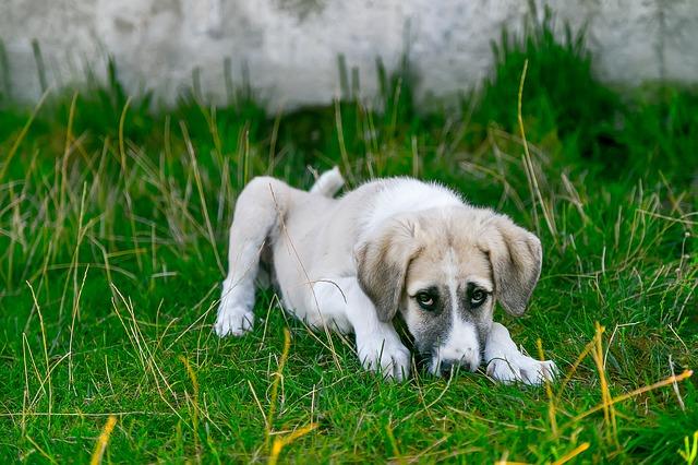 motivos por los que un perro vomita espuma amarilla