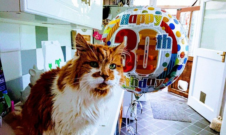 muere rubble el gato más viejo del mundo