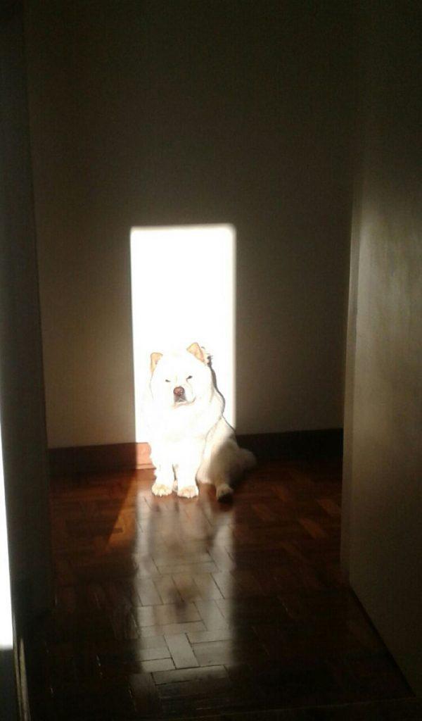 perro al sol