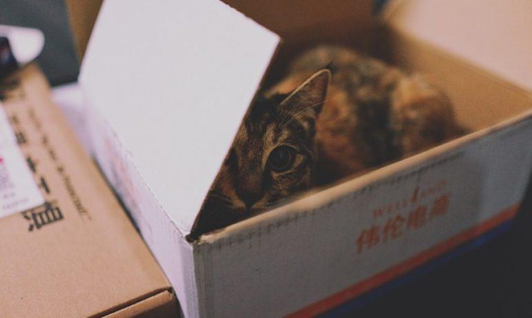 Por qué a mi gato le gustan las cajas