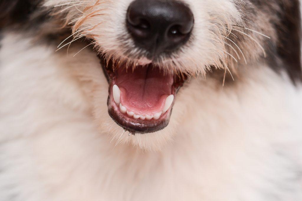 por qué mi perro vomita espuma blanca