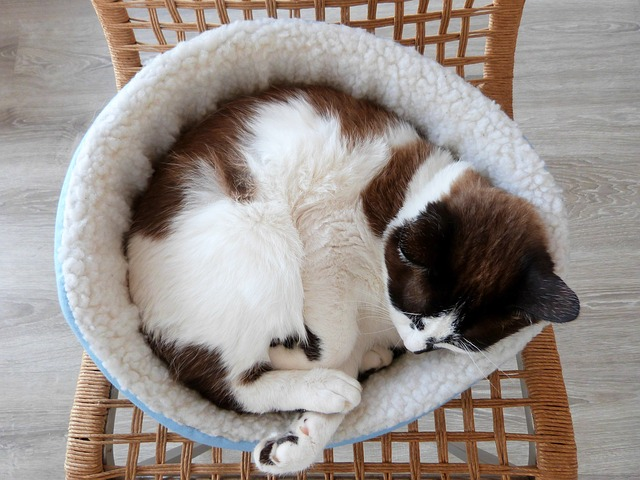 tips para lograr el hogar perfecto para gatos