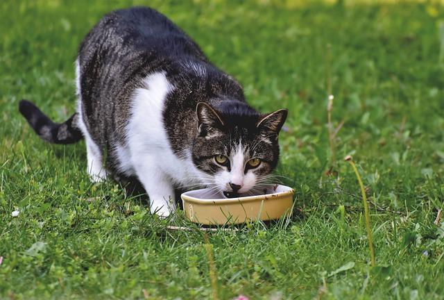 tips para mantener a un gato en buena forma