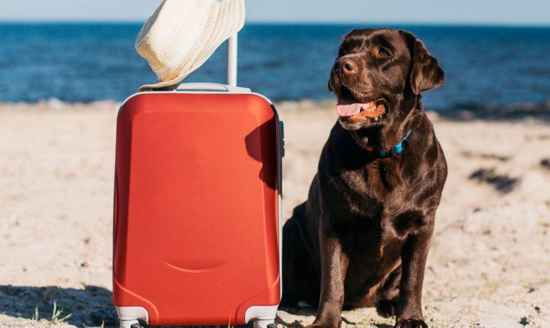 vacaciones verano mascota