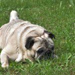 Aumentan en España los parásitos en las mascotas debido al calor