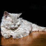 aumentan las intoxicaciones de mascotas por productos químicos