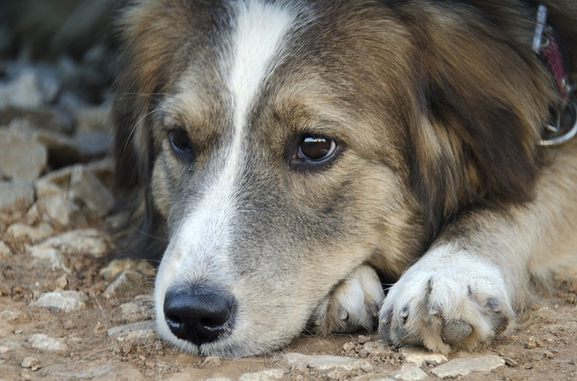 causas más comunes del estreñimiento en perros