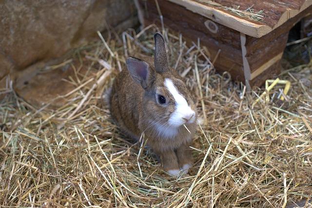 claves para educar a un conejo