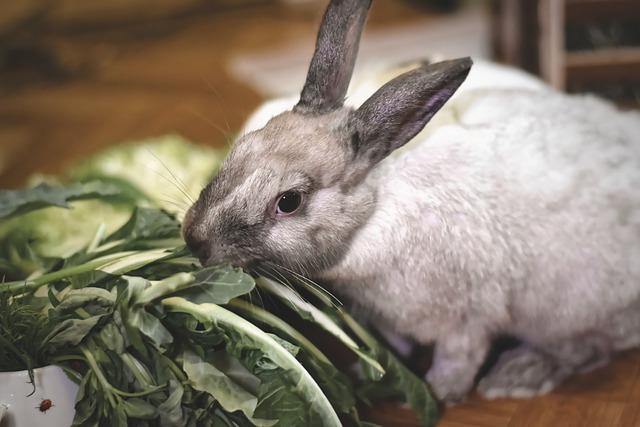 cómo educar a un conejo