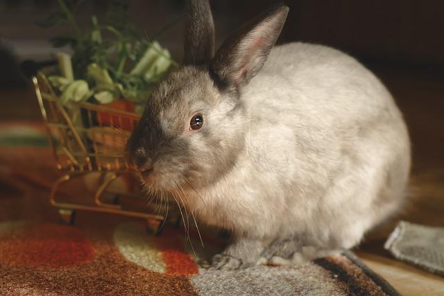 consejos para educar a un conejo