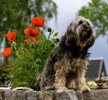 cuidados si tienes mascotas en el jardín